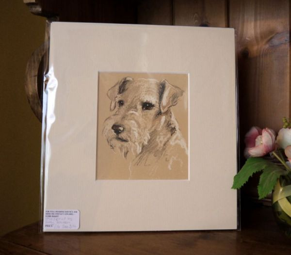 White Sealyham - head , looking out 1930's print by Lucy Dawson - Sea D14